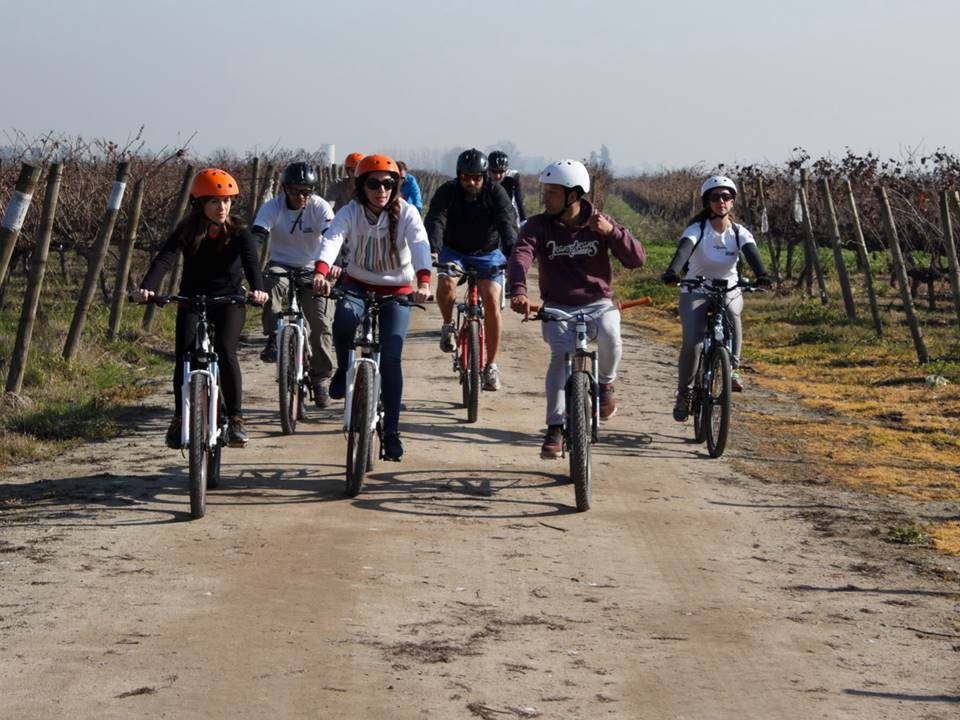 Book wine bike tour in Maipo Valley